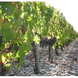 Visite Terroirs 4 vins