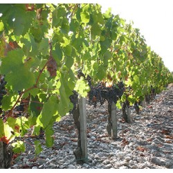Visite Terroirs 3 vins